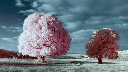 Obraz na PlexiWhite tree