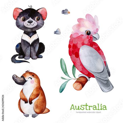 Fototapeta premium Zestaw australijskich akwareli. Ładna kolekcja z diabłem tasmańskim, dziobakiem, kakadu, kamieniami. Urocze zwierzęta z akwareli. Idealny do tapet, nadruków, opakowań, zaproszeń, baby shower, wzorów, podróży, logo itp.