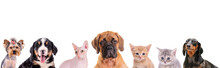 Different Dogsand Cats Isolated