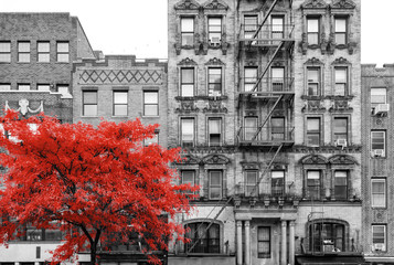 Panel Szklany Nowy York Red tree in black and white street scene in the East Village of Manhattan in New York City