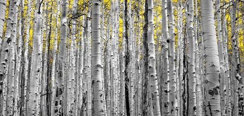 FototapetaForest of Golden Trees