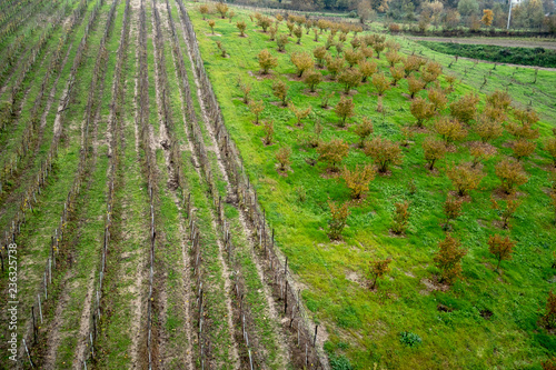 Greco di Tufo vineyards and hazelnut plantation, two excellences of the province Wallpaper Mural