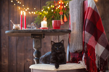 Black Cat On Chair With Wooden...
