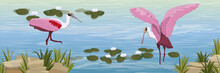 A Flock Of Pink Roseate Spoonbill Birds In The Water. Pond With White Water Lilies, Stones And Tall Grass. Animals Of Florida, Chile And Argentina. Everglades National Park. Realistic Vector Landscape