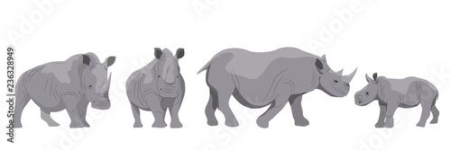 Fototapeta Collection of adult white and black african rhinos and their young