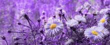 Proton Purple Flowers Chrysanthemum Background Banner Modern Design