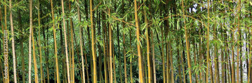 Wall Murals Bamboo Bamboo grass stalk plants stems growing in California park like grove