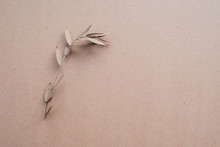 Isolated Dry Twig With Leaves On The Background Of Kraft Paper. Beautiful Conceptual Photography For Designers, Artists, Advertising And Other Creative Purposes.