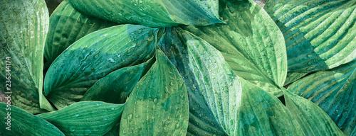Papiers peints Vegetal Fresh garden leaves bell organic gardening background