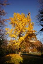Paris Monument 388