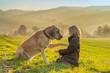 canvas print picture - Hund stubst seinen besten Freund, das Kind, behutsam mit seiner Pfote an - Vertrauen zwischen Mensch und Tier an einem sonnigen Herbsttag