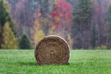 Hay Bale In Farm Field, Bristo...