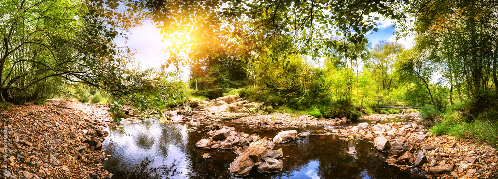 Fototapeta Panoramic summer landscape with forest stream