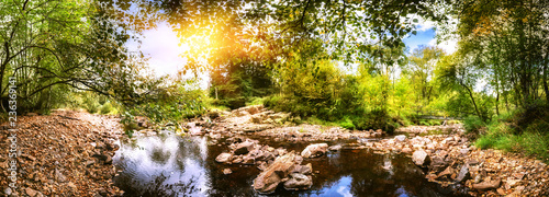Canvas Prints Forest river Panoramic summer landscape with forest stream