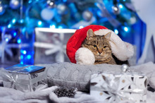 Adult Cat Laying Under The Santa Hat Next To The Christmas Tree