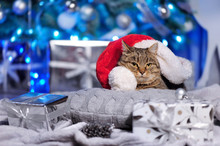 Cat Wearing Santa Hat Laying Against Christmas Tree Background
