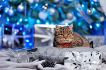 Laying Tabby Cat  Against Christmas Tree Background