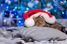 Tabby Cat Laying Next To The Christmas Tree Under The Santa Hat