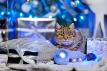 Tabby Cat Laying On The Pillow Against Christmas Tree Background