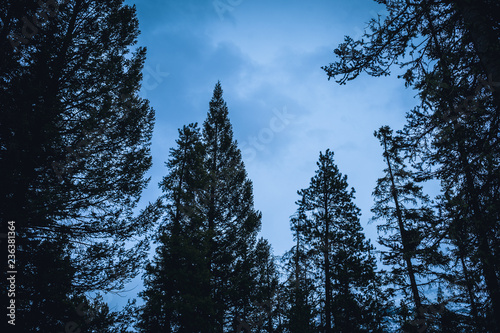Foto op Aluminium Volle maan moody winter forest