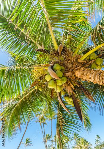 Foto op Plexiglas Palm boom looking up at a coconut palm tree