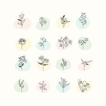 Set Of Hand Drawn Botanical El...