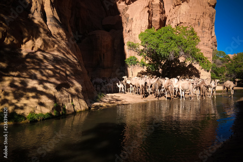 Panorama inside canyon aka guelta Bashikele with camels in East Ennedi, Chad