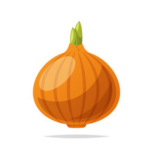 Onion Vector Isolated Illustration