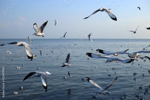 Photo Seagull in Bangpu Samutprakan Thailand