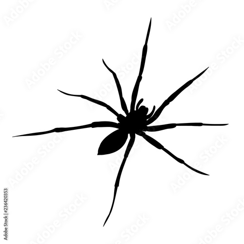 Leinwand Poster isolated on white background spider one