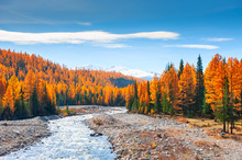 Mountain River And Autumn Forest In Altai, Siberia, Russia