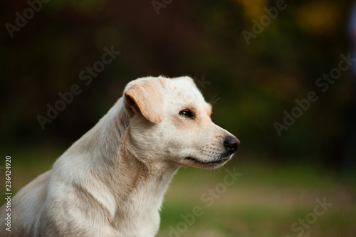 Foto  white crossbreed dog
