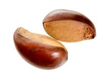Two Nuts Vitellaria Paradoxa ,...