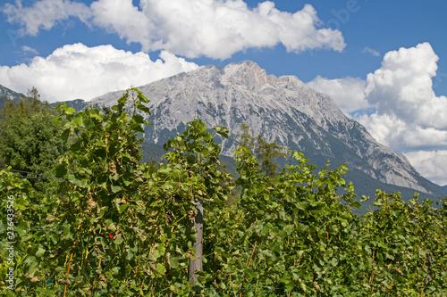 Weinanbau auf dem Mieminger Plateau