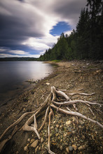 Lake Shore And Dry Wood. Norwe...