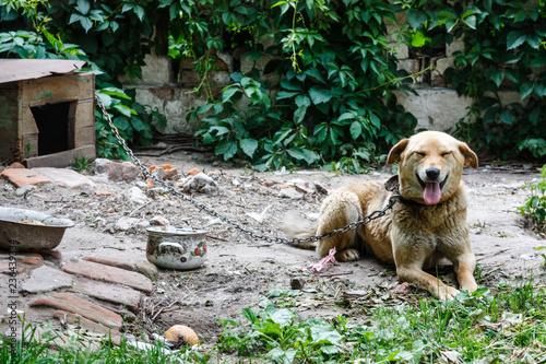 Foto  mongrel dog near its kennel.