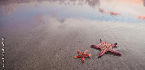 Obraz na płótnie Two starfish on sea beach at sunset