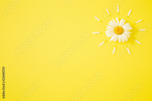 Sun Shape Created From Fresh White Daisy On Bright Yellow Background Wild Flower Greeting Card Mockup For Positive Idea Empty Place Inspirational