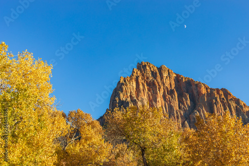 Scenic Autumn Landscape in Zion National Park Utah