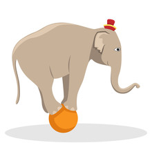 Circus Trained Elephant On The...