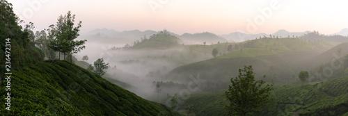 Foto  Lever de soleil sur les plantations de thé de Munnar, Kerala, Inde