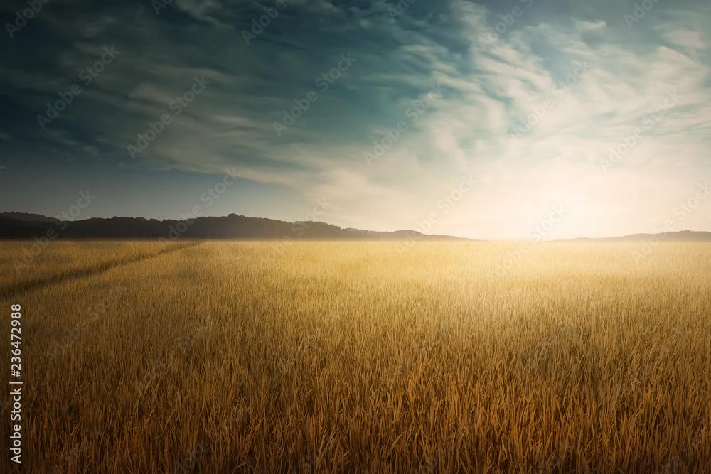 Fototapety, obrazy: Landscape view of dry savanna with blue sky background
