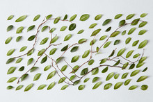 Pattern Of Green Leaves On A Gray Texture