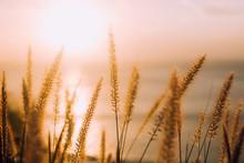 Grass At Sunset