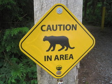 Cougar In The Area