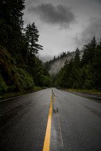 Diminishing Perspective Of Wet Road Amidst Trees Against Sky At Olympic National Park