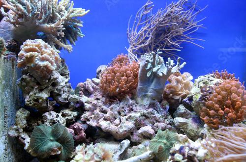 Zbiornik akwarium z rafą koralową