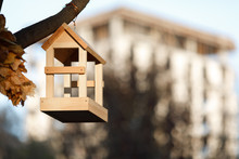 New Wooden Nesting Box In The Park