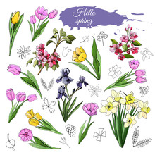 Set Of Different Spring Flowers: Tulip, Iris, Narcissus, Malus And Doodle Elements. Hand Drawn Colored  Sketch  For Greeting Card, Invitation.