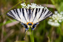 Overhead View Of Butterfly Pollinating On White Flowers